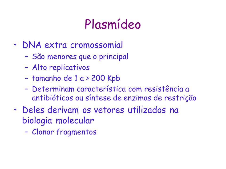 Plasmídeo DNA extra cromossomial –São menores que o principal –Alto replicativos –tamanho de 1 a > 200 Kpb –Determinam característica com resistência