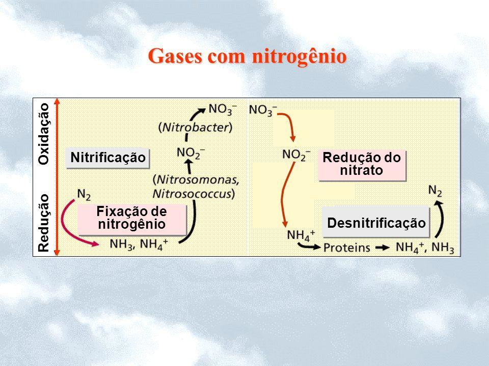 Redução Oxidação Nitrificação Redução do nitrato Redução do nitrato Fixação de nitrogênio Fixação de nitrogênio Desnitrificação Gases com nitrogênio