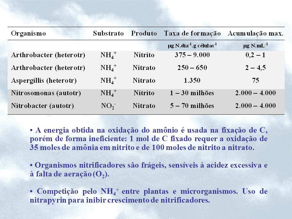 A energia obtida na oxidação do amônio é usada na fixação de C, porém de forma ineficiente: 1 mol de C fixado requer a oxidação de 35 moles de amônia