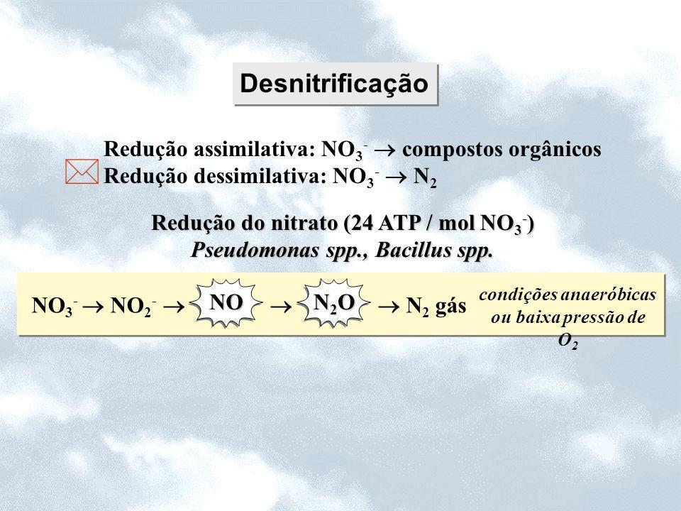 Desnitrificação Redução assimilativa: NO 3 - compostos orgânicos Redução dessimilativa: NO 3 - N 2 NO 3 - NO 2 - N 2 gás NO N2ON2ON2ON2O condições ana