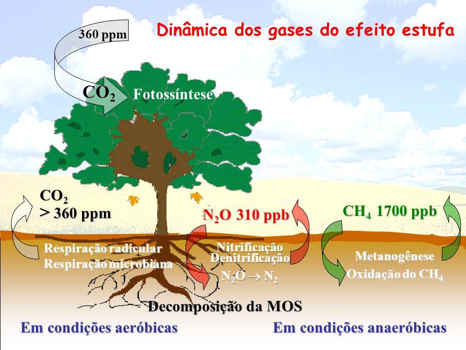 CO 2 Fotossíntese Respiração radicular Respiração microbiana 360 ppm Em condições aeróbicas Em condições anaeróbicas Decomposição da MOS > 360 ppm CO
