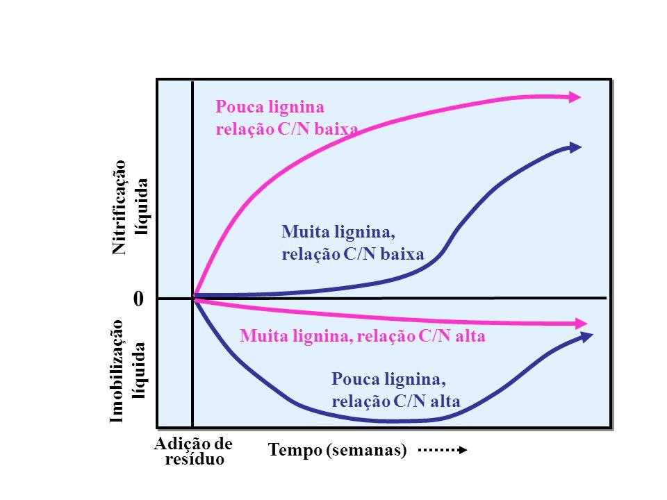 Imobilização líquida Nitrificação líquida 0 Adição de resíduo Tempo (semanas) Muita lignina, relação C/N alta Pouca lignina, relação C/N alta Pouca li
