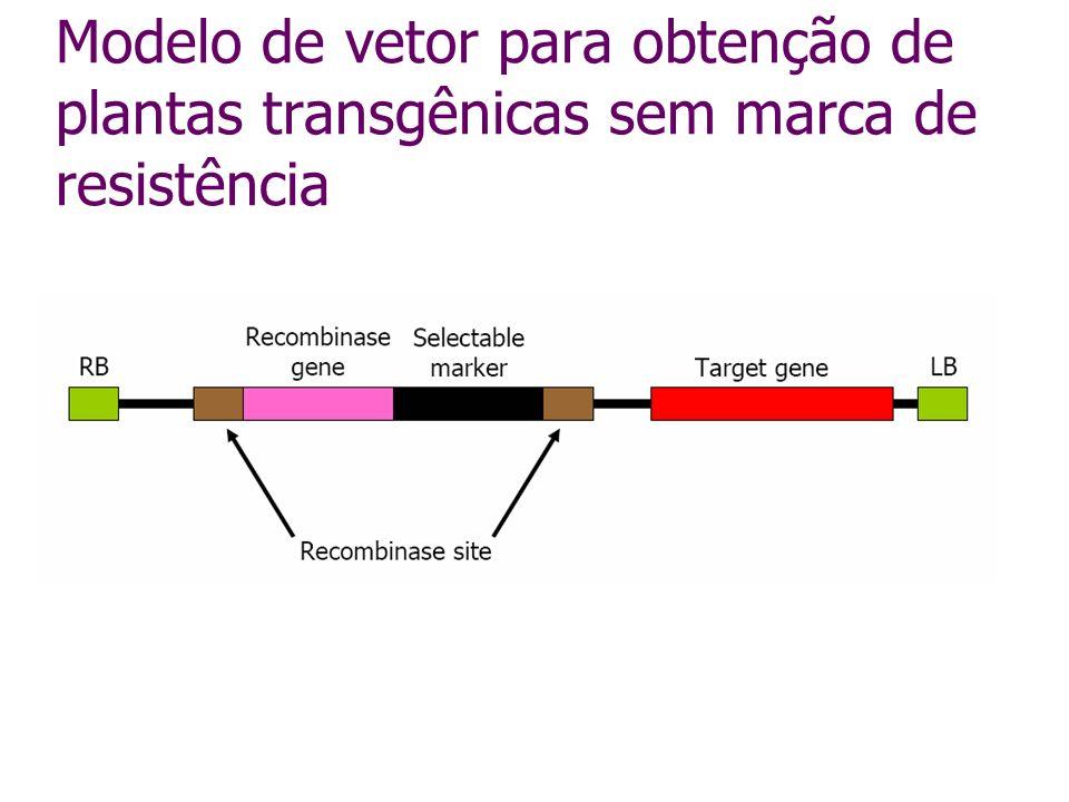 Genes reporter uidA – GUS GFP (green fluorescent protein) luciferase