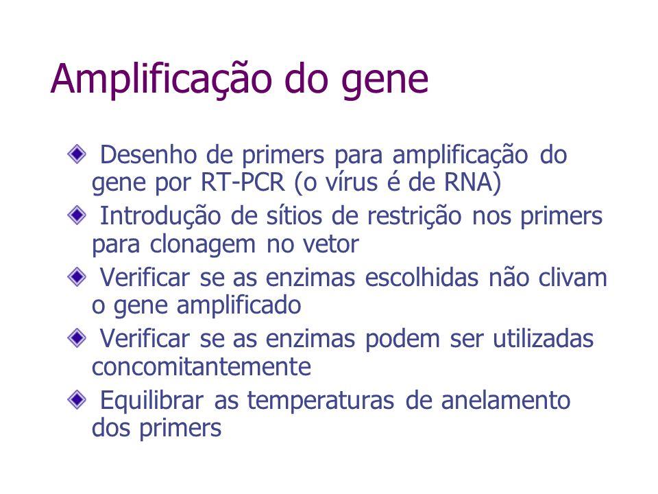 Compatibilidade das enzimas React 1React 2React 3 Hind III5510020 Bam HI10040100 Eco RI100 Pst I100 30 Xho I5510040 Nível de atividade nos diferentes tampões (%) Em negrito = tampão recomendado