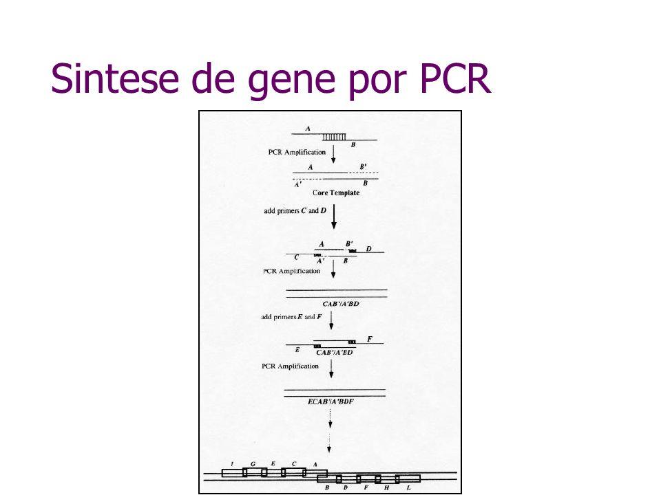 Sintese do gene de cecropina modificada
