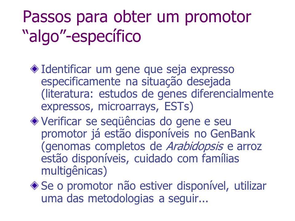 Clonagem de promotores Screening de biblioteca genômica Busca no GenBank Gene-walking (PCR inverso ou com uso de adaptadores)