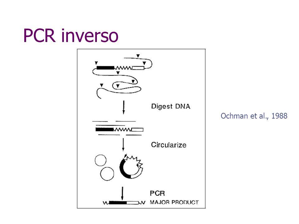 PCR inverso Hind III Eco RI Bam HI Região do promotorGene com seqüência conhecida Hind III ATG