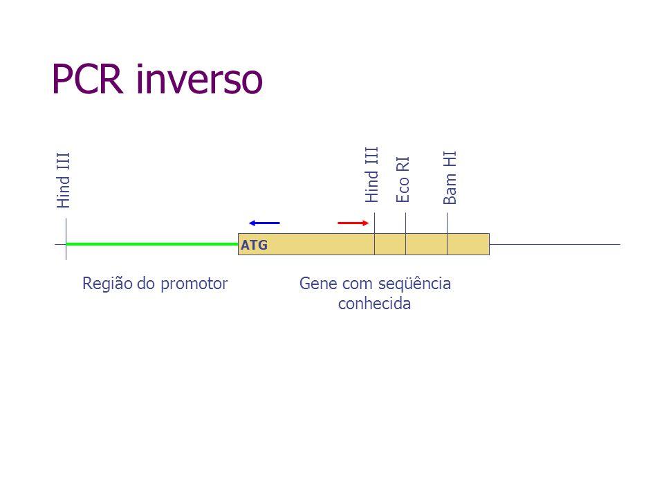 PCR inverso Hind III Digestão com Hind III Hind III ATG