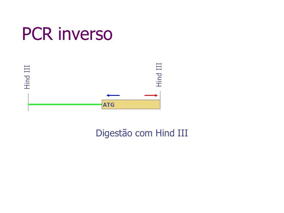 PCR inverso Circularização Hind III ATG
