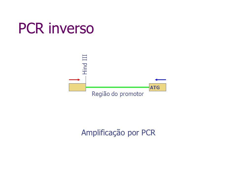 Genome walker kit Digestão com diferentes enzimas de restrição, em tubos separados Ligação de adaptadores 1º PCR com primer específico ao gene (GSP1) e primer específico ao adaptador (AP1) - externos 2º PCR com primer específico ao gene (GSP2) e primer específico ao adaptador (AP2) - internos