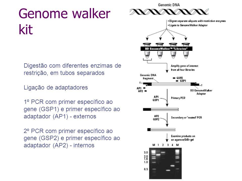 Interferência de RNA Presença de RNA dupla fita (dsRNA) na célula dispara mecanismo de degradação específica Descrito em Caenorhabditis elegans (1998) Ocorre também em plantas, mamíferos, insetos e fungos Forma de proteção do genoma do organismo contra transposons e vírus
