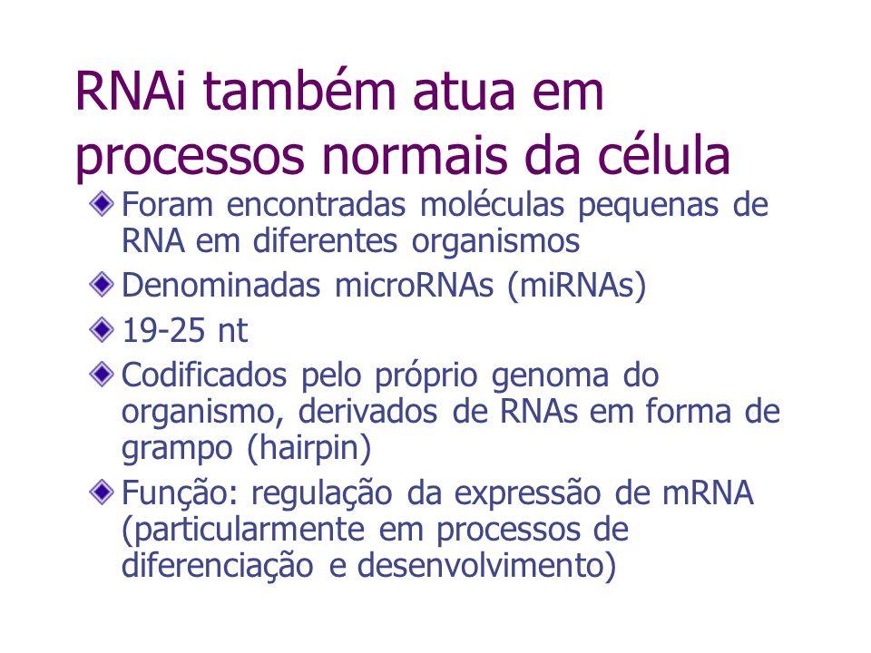 Em animais, miRNAs são parcialmente complementares ao mRNA alvo Um tipo de miRNA pode ter diferentes mRNAs alvos Regra geral, miRNAs ligam-se em vários trechos próximos a extremidade 3 não traduzida do mRNA Essa ligação não leva à degradação do mRNA, mas inibide a sua tradução miRNAs em animais