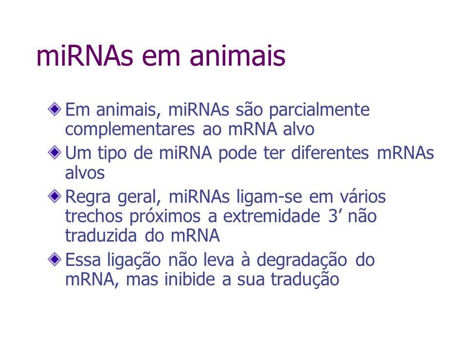 miRNAs em plantas Em plantas, miRNAs são 100% (ou quase) complementares ao mRNA alvo Um tipo de miRNA tem somente um ou poucos mRNAs alvos A ligação do miRNA ao mRNA alvo leva à degradação do mRNA, da mesma forma que o siRNA