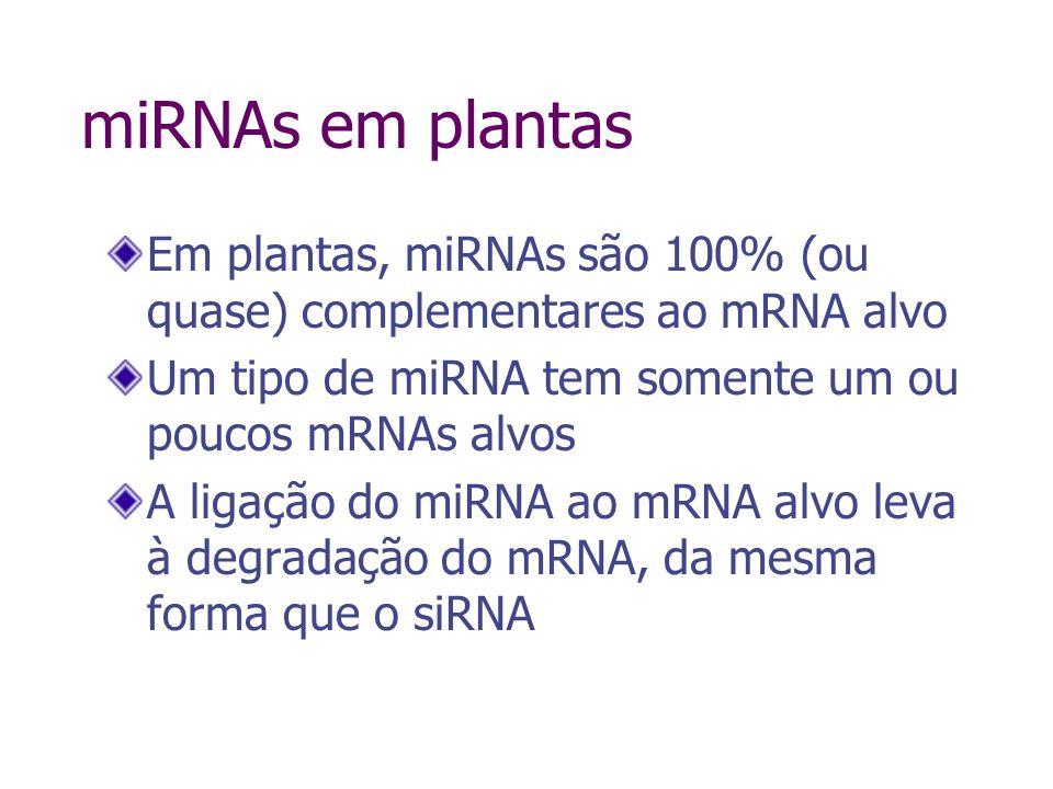 Exemplos de miRNA em Arabidopsis Llave et al., Plant Cell 14:1605, 2002