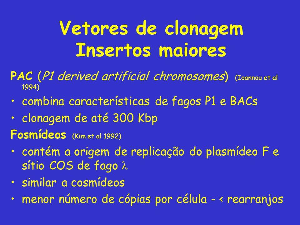 Vetores de clonagem Insertos maiores PAC (P1 derived artificial chromosomes) (Ioannou et al 1994) combina características de fagos P1 e BACs clonagem
