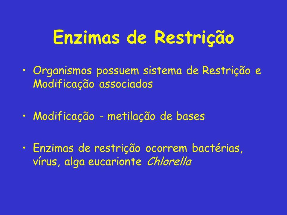 Enzimas de Restrição Organismos possuem sistema de Restrição e Modificação associados Modificação - metilação de bases Enzimas de restrição ocorrem ba