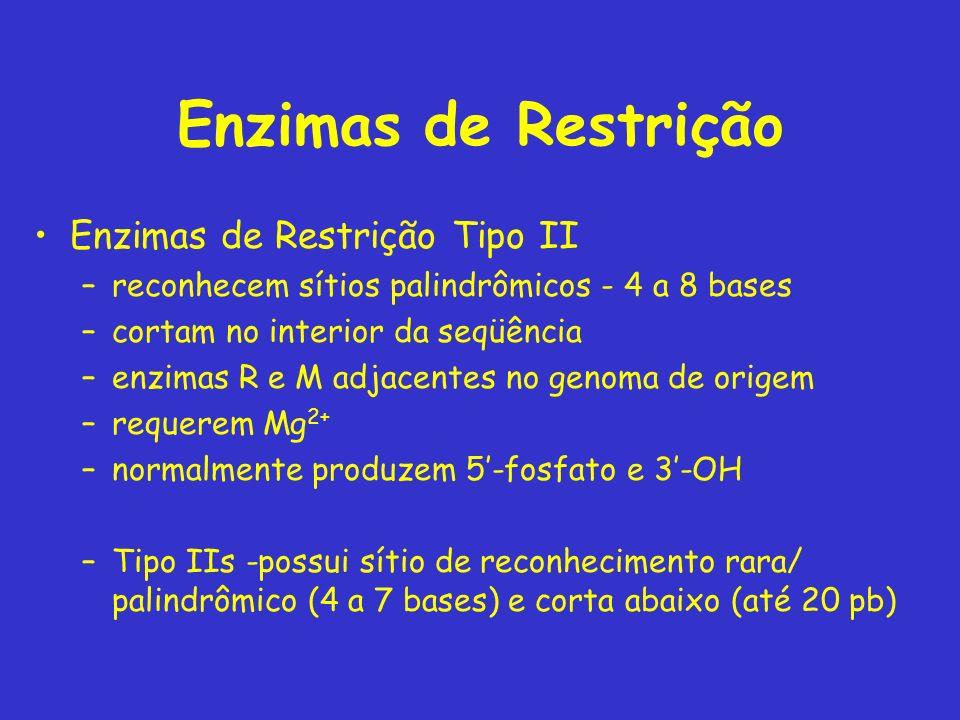 Enzimas de Restrição Enzimas de Restrição Tipo II –reconhecem sítios palindrômicos - 4 a 8 bases –cortam no interior da seqüência –enzimas R e M adjac