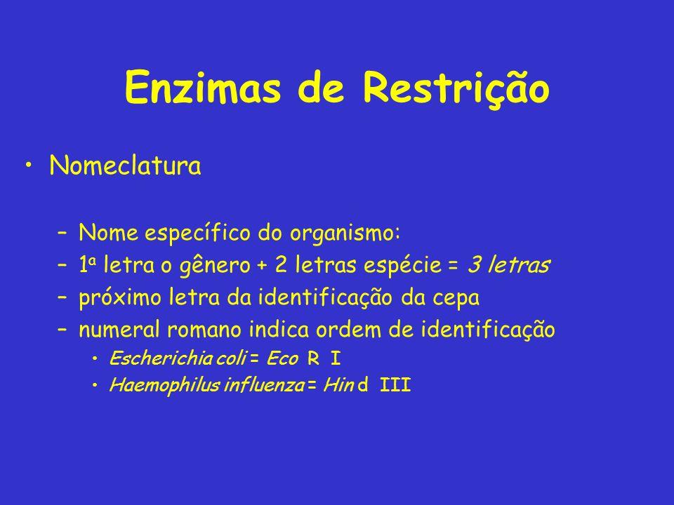 Enzimas de Restrição Nomeclatura –Nome específico do organismo: –1 a letra o gênero + 2 letras espécie = 3 letras –próximo letra da identificação da c