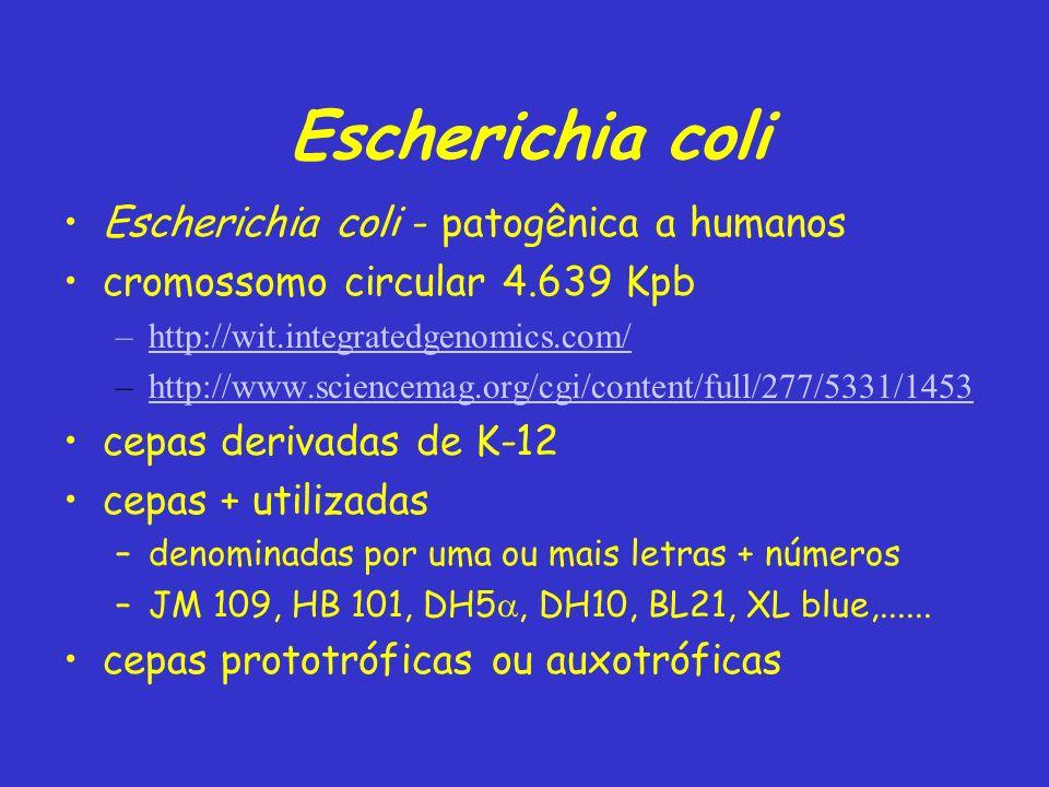 Escherichia coli Escherichia coli - patogênica a humanos cromossomo circular 4.639 Kpb –http://wit.integratedgenomics.com/http://wit.integratedgenomic