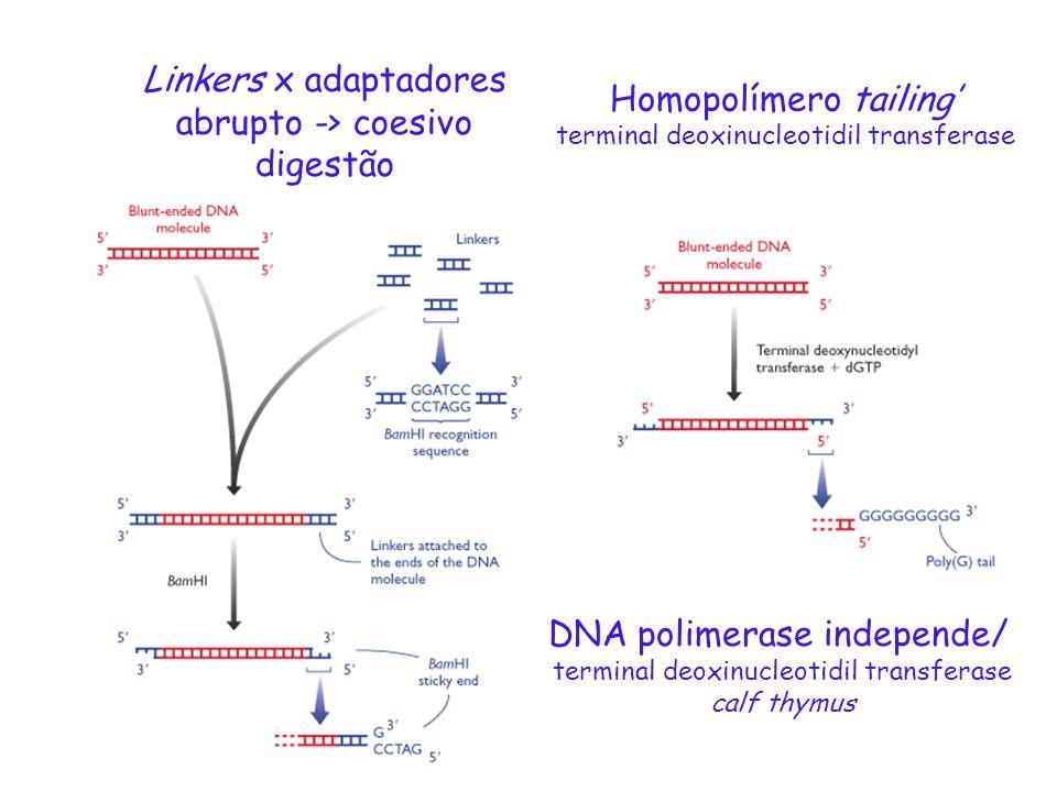 Linkers x adaptadores abrupto -> coesivo digestão Homopolímero tailing terminal deoxinucleotidil transferase DNA polimerase independe/ terminal deoxin
