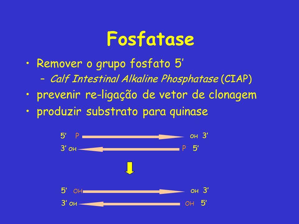 Fosfatase Remover o grupo fosfato 5 –Calf Intestinal Alkaline Phosphatase (CIAP) prevenir re-ligação de vetor de clonagem produzir substrato para quin