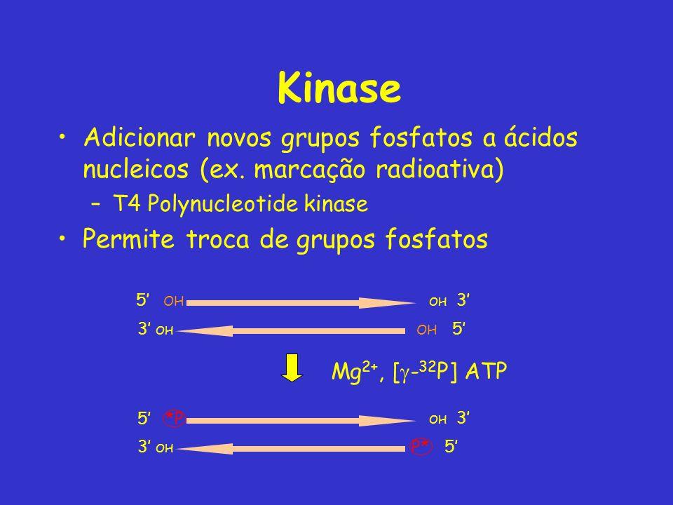 Kinase Adicionar novos grupos fosfatos a ácidos nucleicos (ex. marcação radioativa) –T4 Polynucleotide kinase Permite troca de grupos fosfatos 5 *P 3