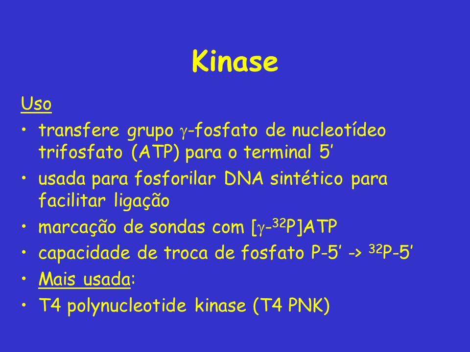 Kinase Uso transfere grupo -fosfato de nucleotídeo trifosfato (ATP) para o terminal 5 usada para fosforilar DNA sintético para facilitar ligação marca