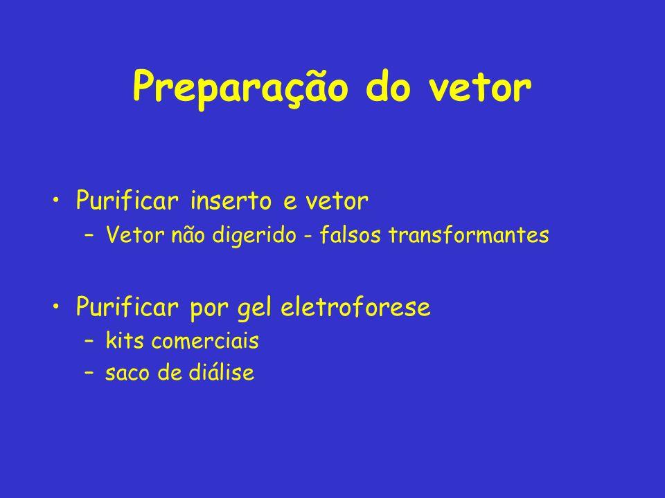 Preparação do vetor Purificar inserto e vetor –Vetor não digerido - falsos transformantes Purificar por gel eletroforese –kits comerciais –saco de diá