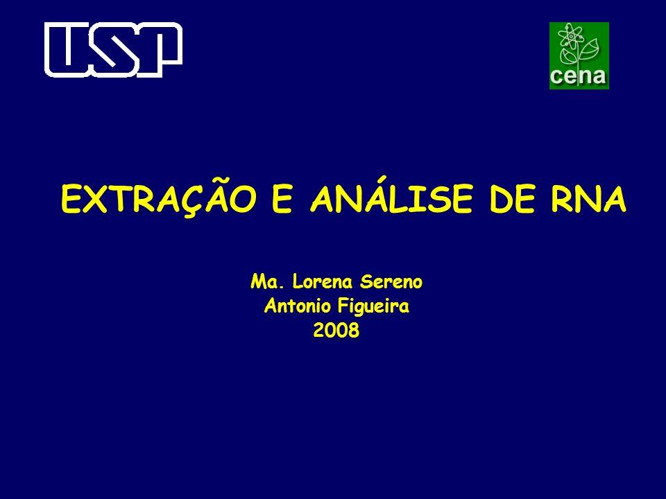 EXTRAÇÃO E ANÁLISE DE RNA Ma. Lorena Sereno Antonio Figueira 2008