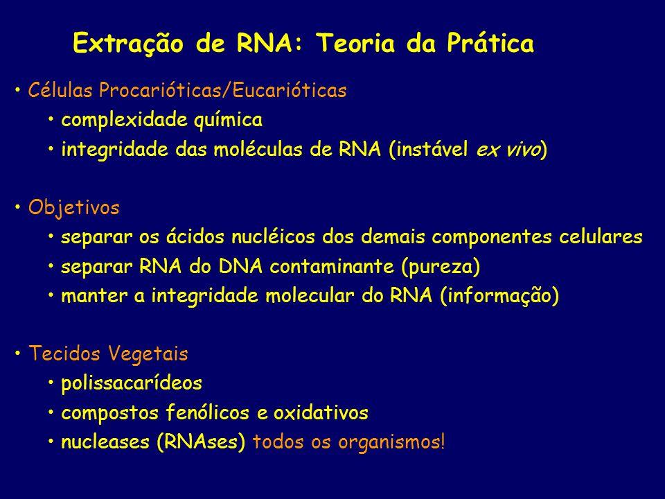 Extração de RNA: Teoria da Prática Células Procarióticas/Eucarióticas complexidade química integridade das moléculas de RNA (instável ex vivo) Objetiv