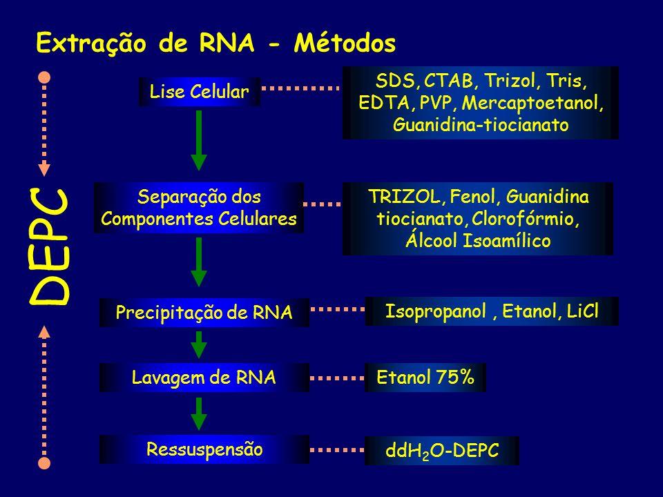 Extração de RNA - Métodos Lise Celular Separação dos Componentes Celulares Precipitação de RNA Lavagem de RNA Ressuspensão SDS, CTAB, Trizol, Tris, ED
