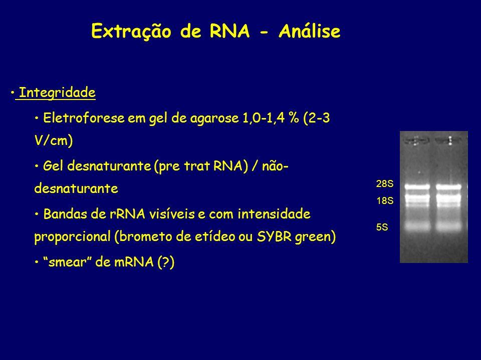 Extração de RNA - Análise Integridade Eletroforese em gel de agarose 1,0-1,4 % (2-3 V/cm) Gel desnaturante (pre trat RNA) / não- desnaturante Bandas d