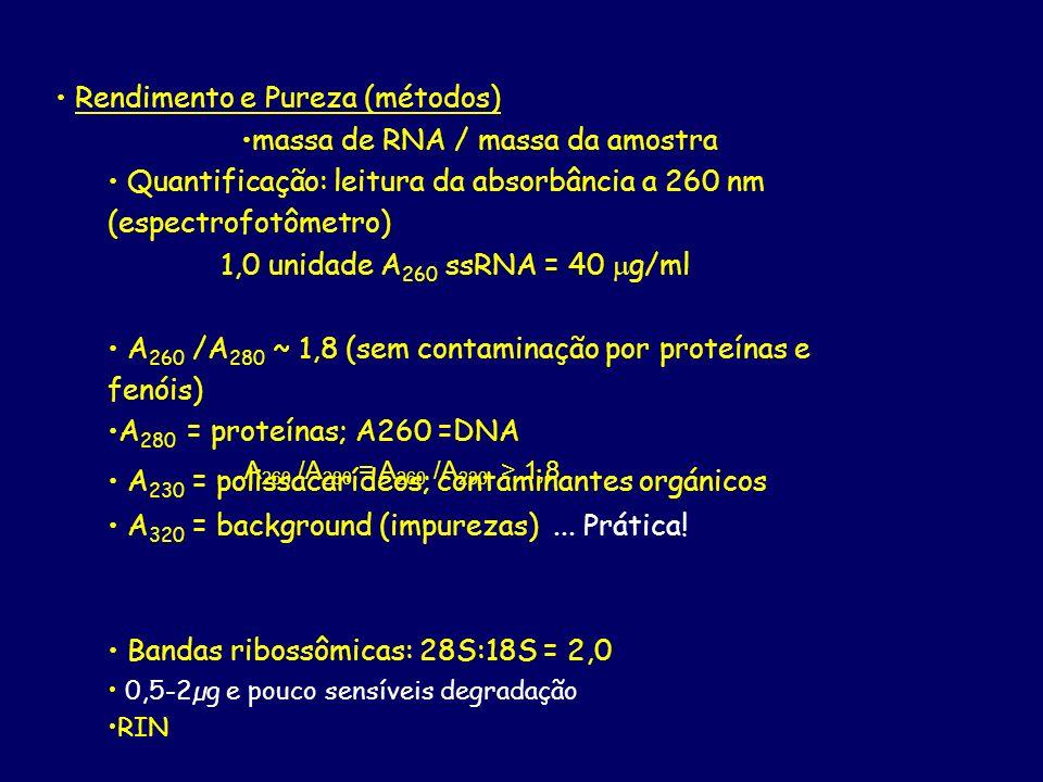 Rendimento e Pureza (métodos) massa de RNA / massa da amostra Quantificação: leitura da absorbância a 260 nm (espectrofotômetro) 1,0 unidade A 260 ssR