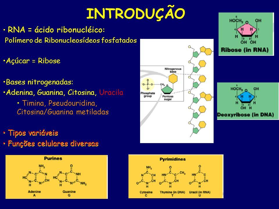 INTRODUÇÃO RNA = ácido ribonucléico: Polímero de Ribonucleosídeos fosfatados Açúcar = Ribose Bases nitrogenadas: Adenina, Guanina, Citosina, Uracila T