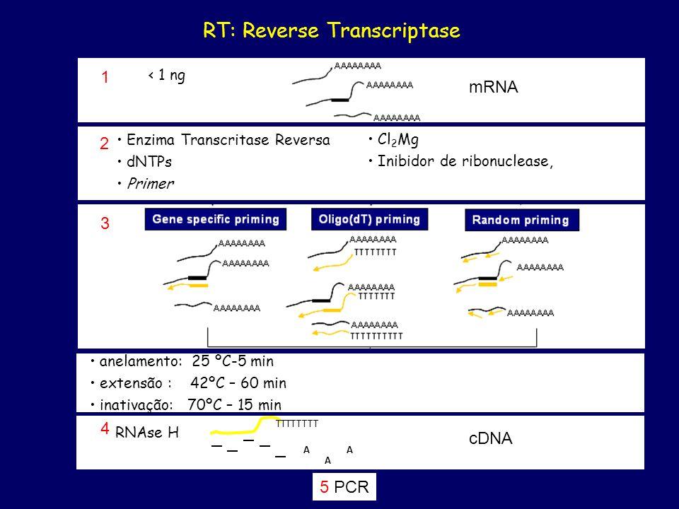 RT: Reverse Transcriptase 3 5 PCR RNAse H TTTTTTTT 4 A A A cDNA 2 Enzima Transcritase Reversa dNTPs Primer Cl 2 Mg Inibidor de ribonuclease, anelament