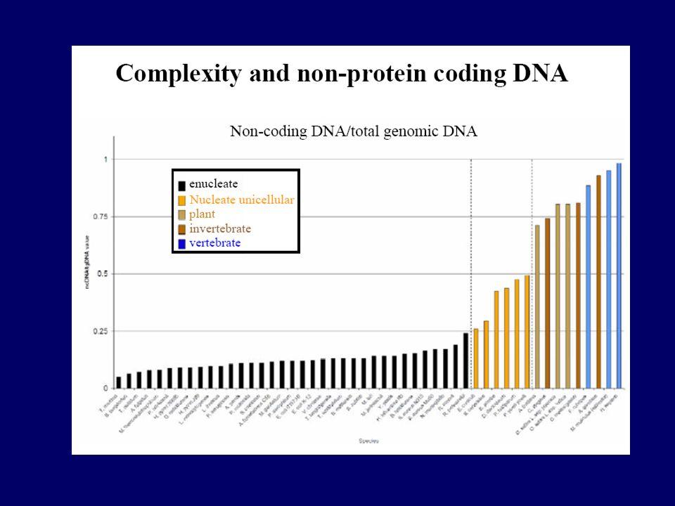 TIPOS / FUNÇÕES do RNA Populares RNA mensageiro (mRNA) = cópia temporária de genes para síntese de proteínas RNA de transferência (tRNA) = adaptador para decodificação do código genético RNA ribossômico (rRNA) = catálise da síntese de proteínas Atividade transcricional do genoma humano