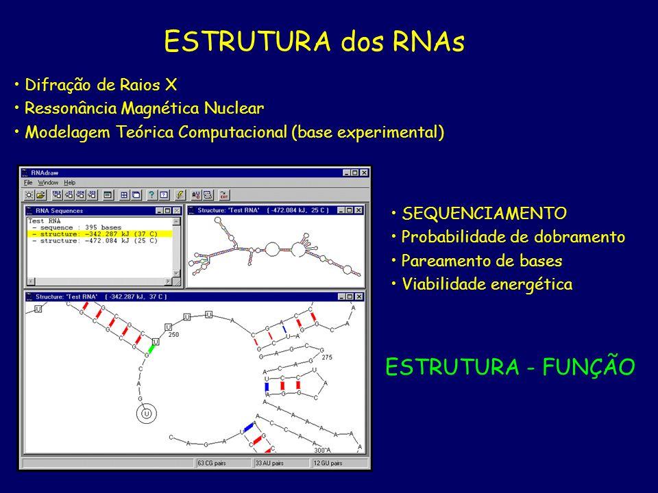 ESTRUTURA dos RNAs Difração de Raios X Ressonância Magnética Nuclear Modelagem Teórica Computacional (base experimental) SEQUENCIAMENTO Probabilidade