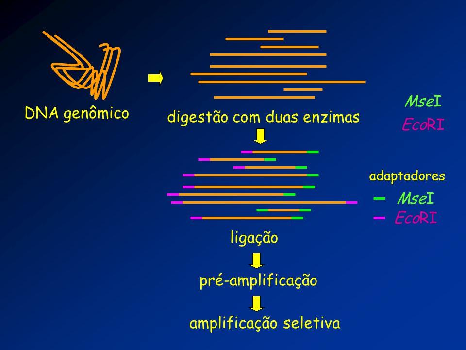 DNA genômico digestão com duas enzimas adaptadores EcoRI MseI pré-amplificação amplificação seletiva ligação MseI EcoRI