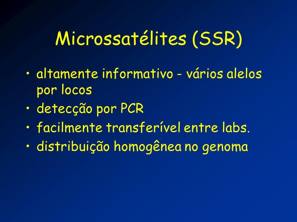 Microssatélites (SSR) NNNNNNNNNNNNNNNNNNNNN CACACACACACACACACAC NNNNNNNNN NNNNN NNNNNNNNNNNNNNNNNNNNN GTGTGTGTGTGTGTGTGTG NNNNNNNNNNNNNN Primer REV Primer FOR Repetição CA