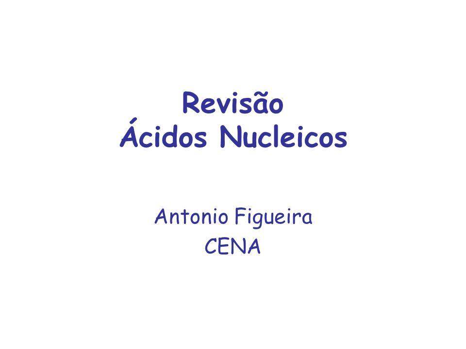 Nucleotídeos e Ácidos Nucleicos Papel de nucleotídeos no metabolismo celular: –constituinte dos ácidos nucleicos - RNA e DNA –fonte de energia no metabolismo -> ATP –molécula-sinal em respostas celulares - > cAMP –componente estrutural de enzimas e co- fatores -> NAD, FAD, etc