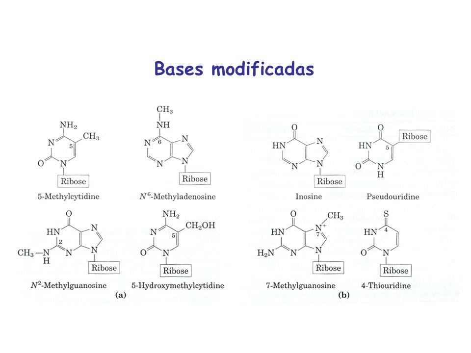 Bases modificadas