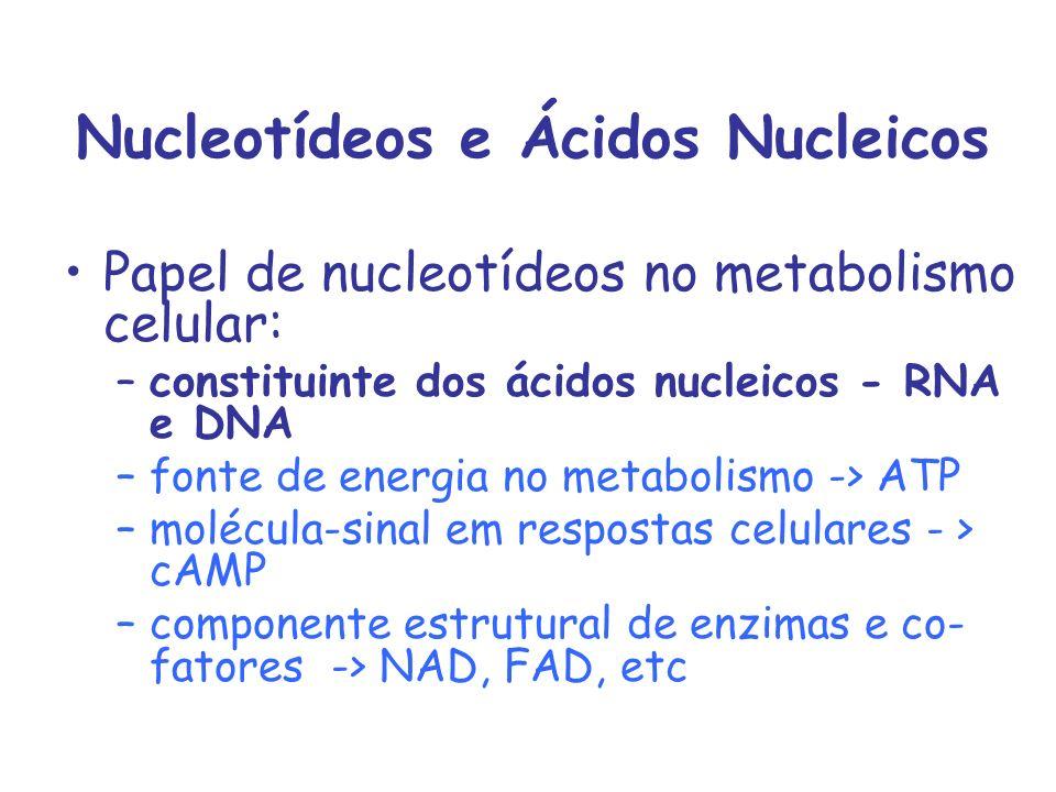 Nucleotídeos e Ácidos Nucleicos Papel de nucleotídeos no metabolismo celular: –constituinte dos ácidos nucleicos - RNA e DNA –fonte de energia no meta