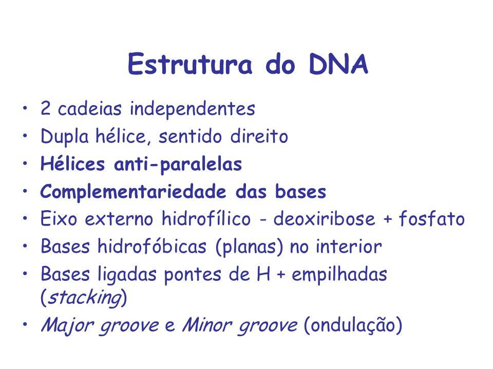 Estrutura do DNA 2 cadeias independentes Dupla hélice, sentido direito Hélices anti-paralelas Complementariedade das bases Eixo externo hidrofílico -