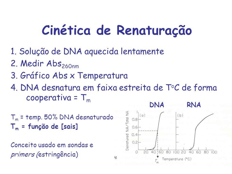 Cinética de Renaturação 1. Solução de DNA aquecida lentamente 2. Medir Abs 260nm 3. Gráfico Abs x Temperatura 4. DNA desnatura em faixa estreita de T