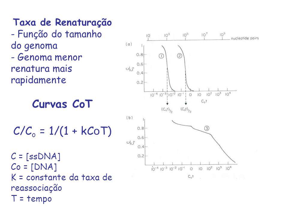 Taxa de Renaturação - Função do tamanho do genoma - Genoma menor renatura mais rapidamente Curvas CoT C/C o = 1/(1 + kC o T) C = [ssDNA] Co = [DNA] K