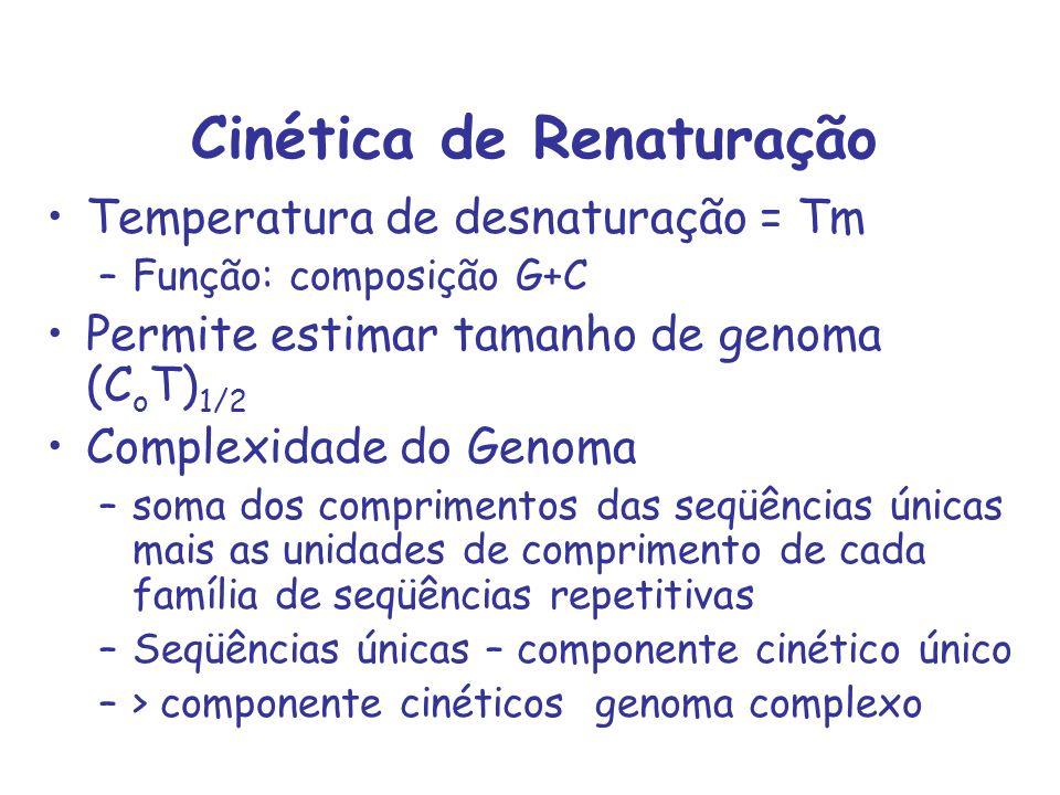 Cinética de Renaturação Temperatura de desnaturação = Tm –Função: composição G+C Permite estimar tamanho de genoma (C o T) 1/2 Complexidade do Genoma