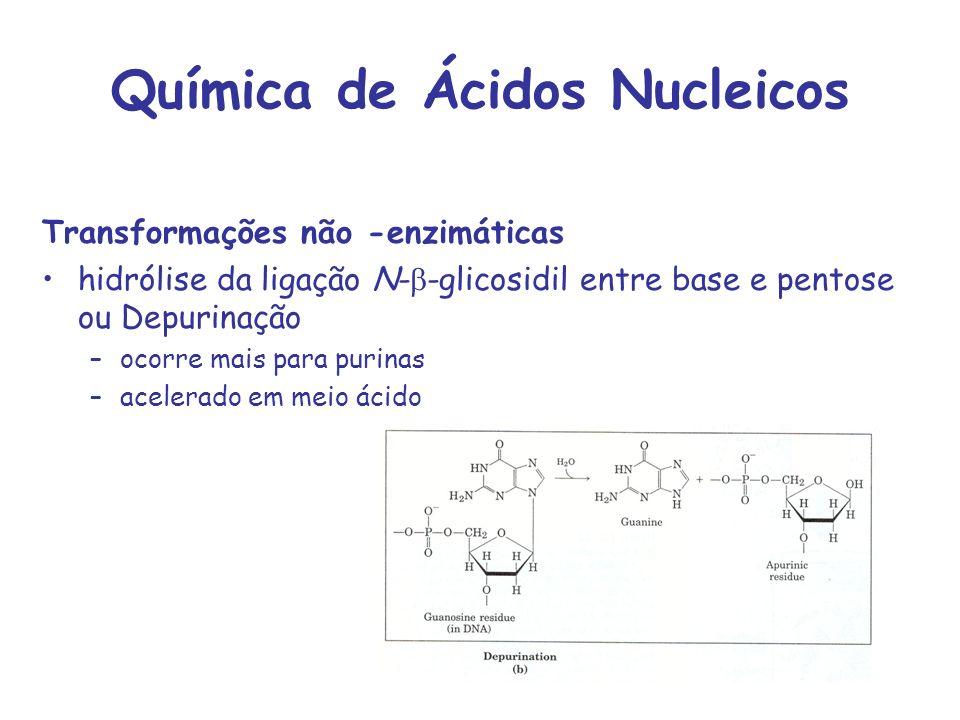 Química de Ácidos Nucleicos Transformações não -enzimáticas hidrólise da ligação N- -glicosidil entre base e pentose ou Depurinação –ocorre mais para