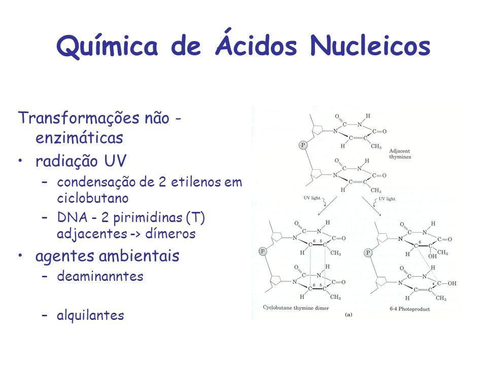 Química de Ácidos Nucleicos Transformações não - enzimáticas radiação UV –condensação de 2 etilenos em ciclobutano –DNA - 2 pirimidinas (T) adjacentes