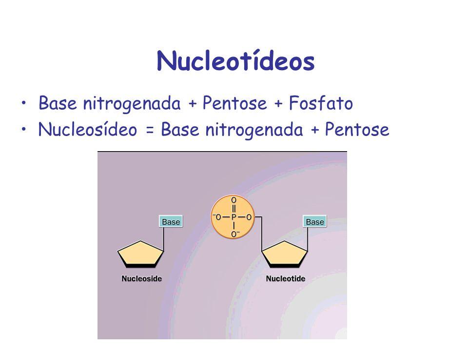 Pentoses Ribose em RNA 2-deoxi-ribose em DNA -furanose
