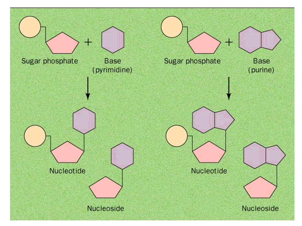 Química de Ácidos Nucleicos Transformações não - enzimáticas radiação UV –condensação de 2 etilenos em ciclobutano –DNA - 2 pirimidinas (T) adjacentes -> dímeros agentes ambientais –deaminanntes –alquilantes